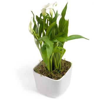 Φυτά που καθαρίζουν την ατμόσφαιρα σε εσωτερικούς χώρους