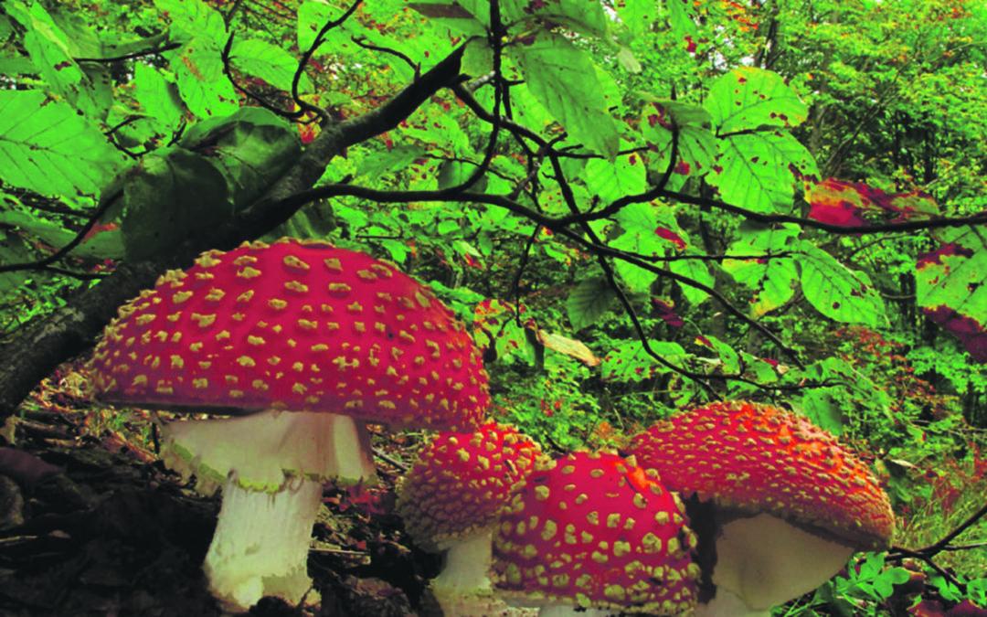 Γρεβενά,  η μαγεία της φύσης – του Αθανάσιου Ζέρβα