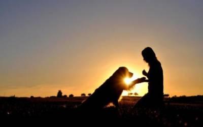 Ο Σκύλος σου Θέλει Κάτι να σου Πει…Ένας εξειδικευμένος συμπεριφοριστής–κτηνίατρος δίνει συμβουλές για να καταλάβεις τι προσπαθεί να σου πει ο πιστός σου φίλος!
