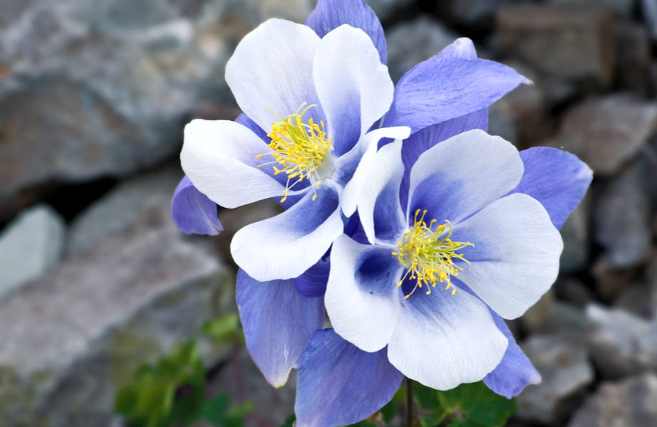 Τα λουλουδάκια του μπαξέ Της Ελένης Γκόρα